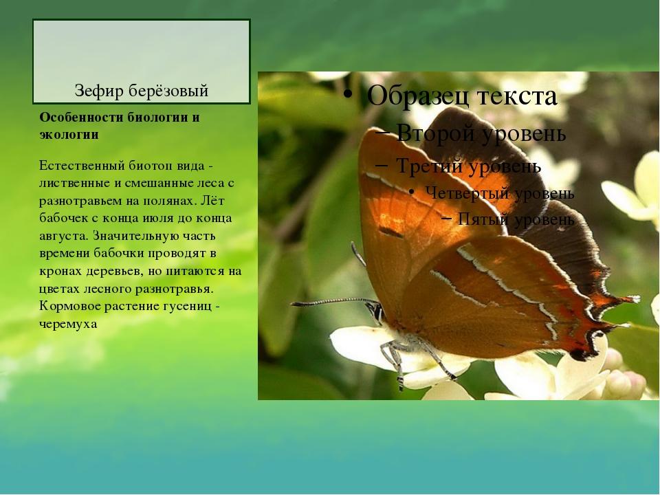 Зефир берёзовый Особенности биологии и экологии Естественный биотоп вида - ли...