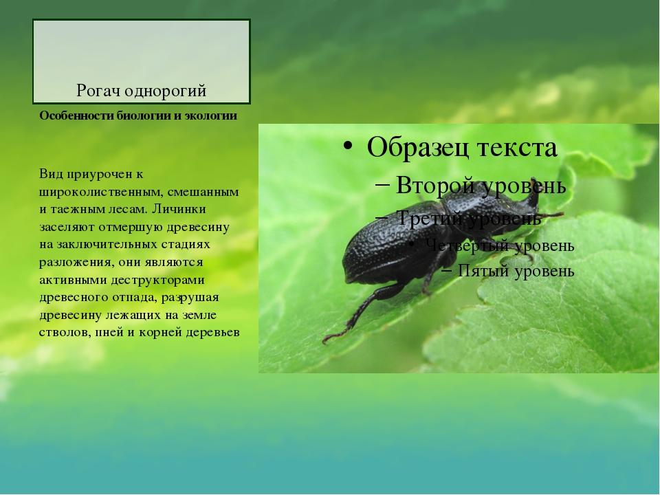 Рогач однорогий Особенности биологии и экологии Вид приурочен к широколиствен...