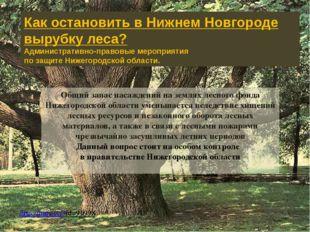 Общий запас насаждений на землях лесного фонда Нижегородской области уменьшае