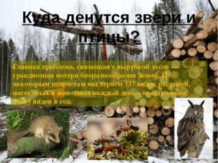 Главная проблема, связанная с вырубкой лесов — грандиозная потеря биоразнообр
