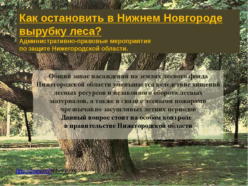 Общий запас насаждений на землях лесного фонда Нижегородской области уменьшае...