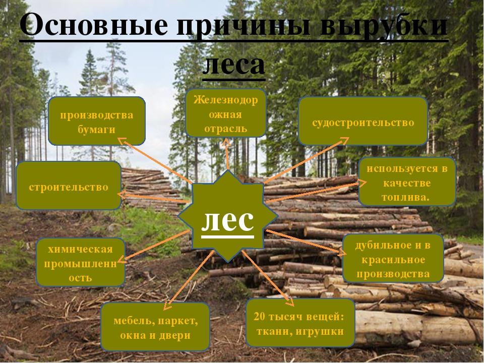 Основные причины вырубки леса 20 тысяч вещей: ткани, игрушки используется в к...