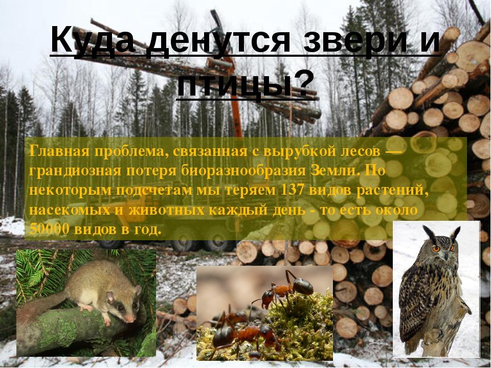Главная проблема, связанная с вырубкой лесов — грандиозная потеря биоразнообр...