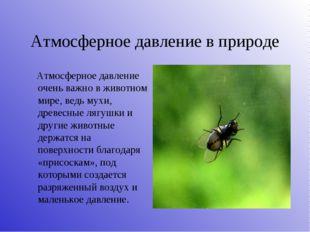 Атмосферное давление в природе Атмосферное давление очень важно в животном ми