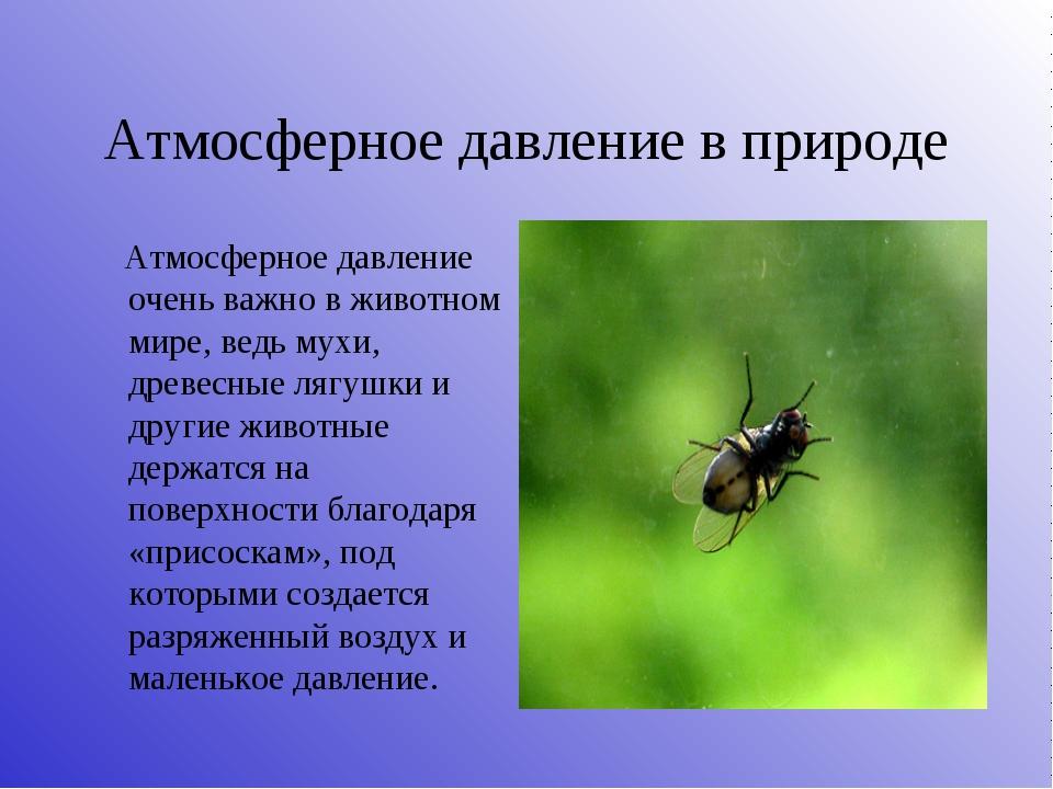 Атмосферное давление в природе Атмосферное давление очень важно в животном ми...