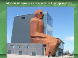 Музей человеческого тела в Нидерландах
