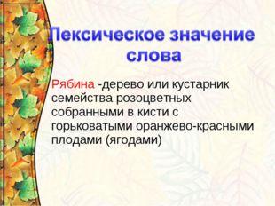 Рябина -дерево или кустарник семейства розоцветных собранными в кистис горьк