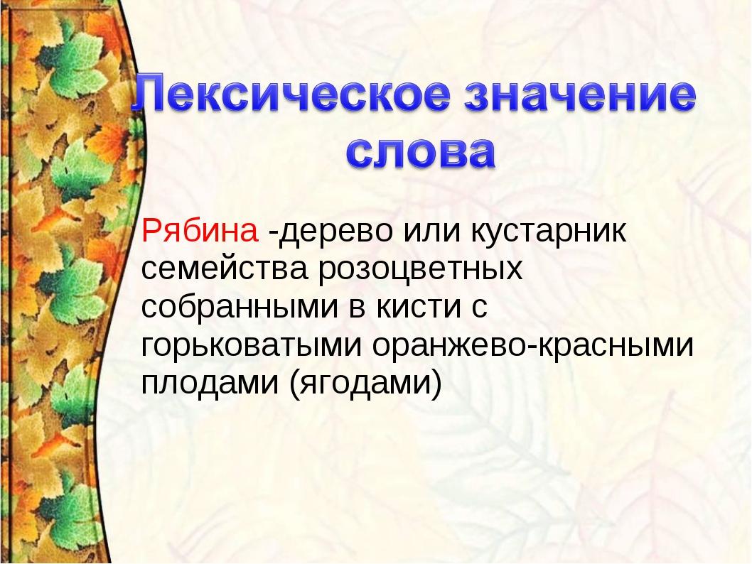 Рябина -дерево или кустарник семейства розоцветных собранными в кистис горьк...