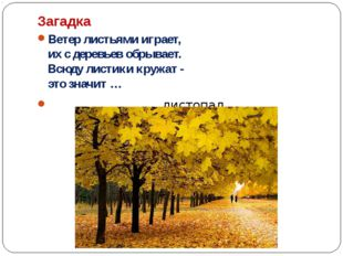 Загадка Ветер листьями играет, их с деревьев обрывает. Всюду листики кружат -