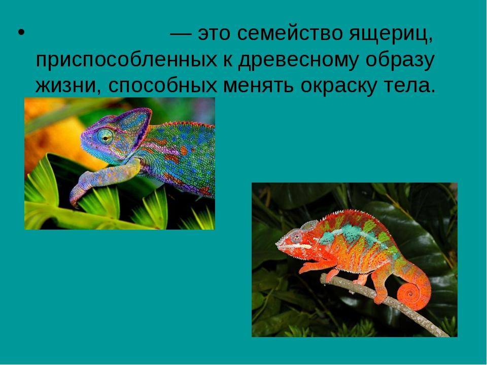 Хамелео́ны— это семействоящериц, приспособленных к древесному образу жизни,...