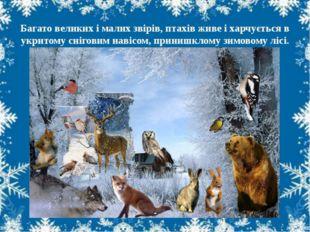 Багато великих і малих звірів, птахів живе і харчується в укритому сніговим
