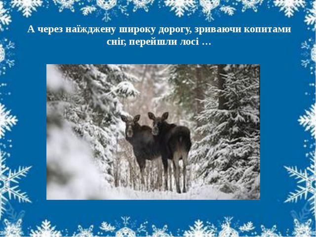 А через наїжджену широку дорогу, зриваючи копитами сніг, перейшли лосі …