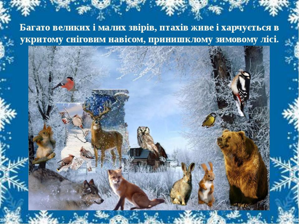 Багато великих і малих звірів, птахів живе і харчується в укритому сніговим...