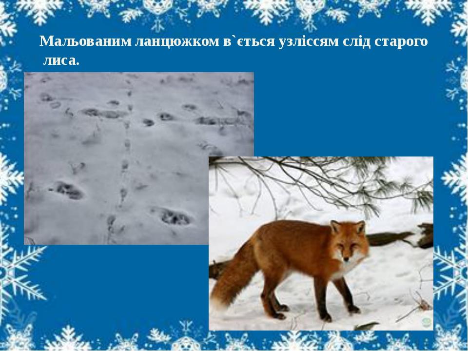 Мальованим ланцюжком в`ється узліссям слід старого лиса.
