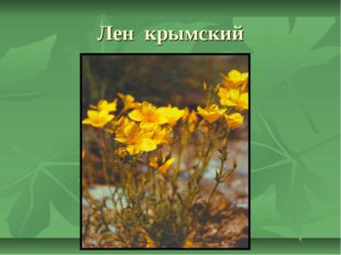Лен крымский