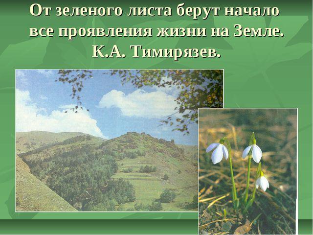 От зеленого листа берут начало все проявления жизни на Земле. К.А. Тимирязев.