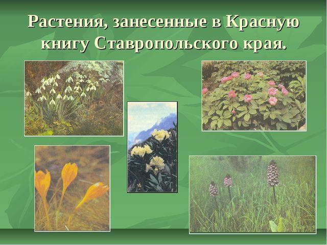 Растения, занесенные в Красную книгу Ставропольского края.