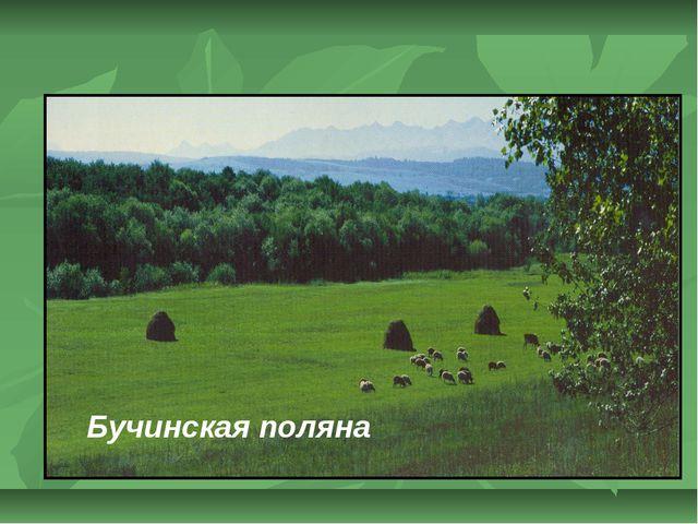 Бучинская поляна