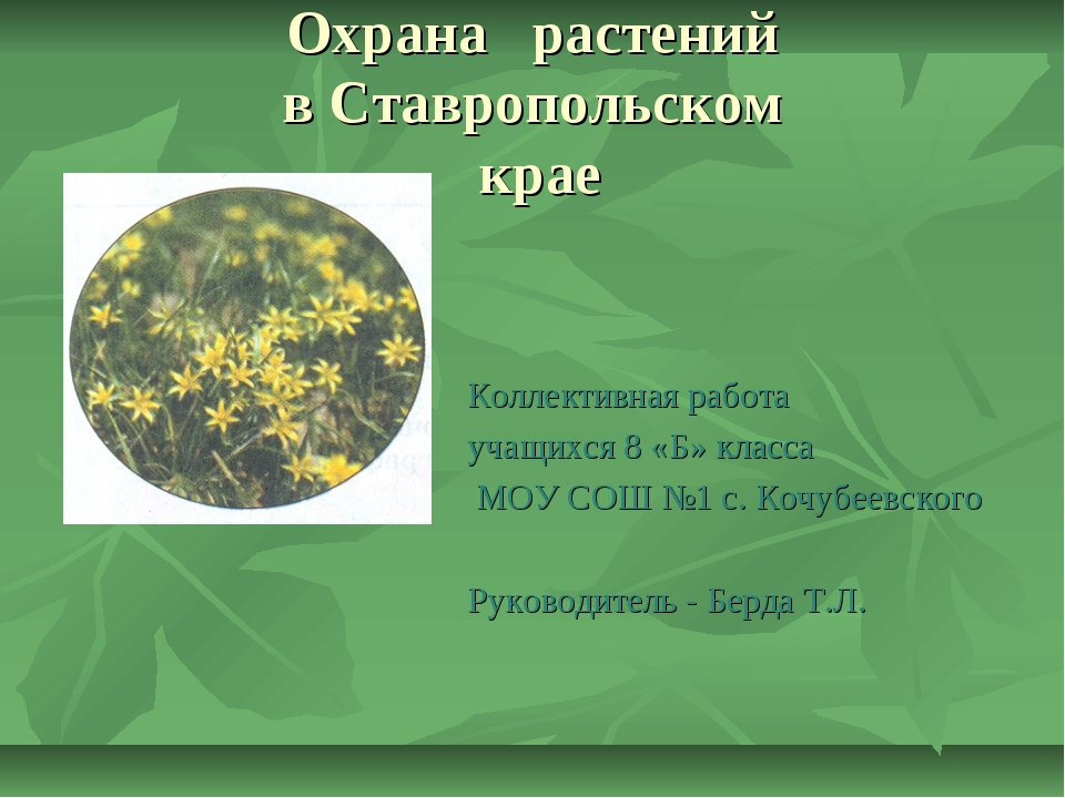Охрана растений в Ставропольском крае Коллективная работа учащихся 8 «Б» клас...