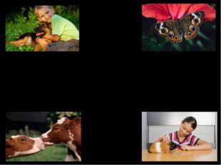 Tiere Haustier Lieblingstier