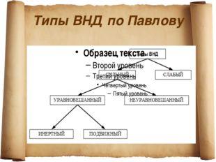 Типы ВНД по Павлову