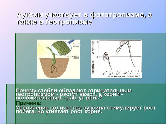 Ауксин участвует в фототропизме, а также в геотропизме Почему стебли обладают...