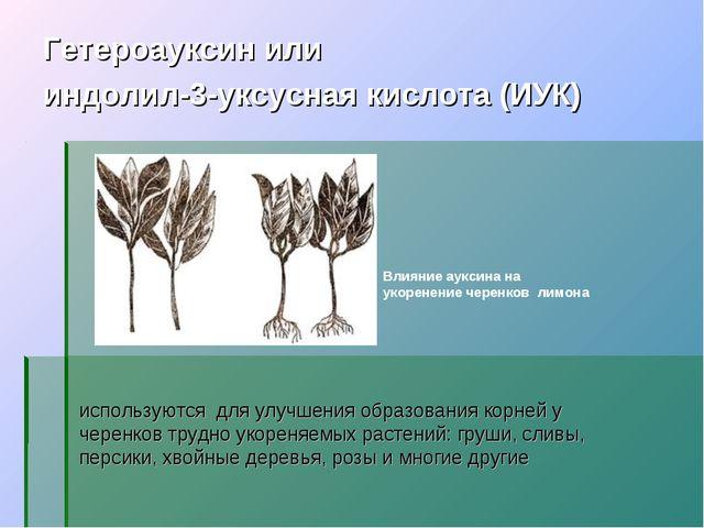 используются для улучшения образования корней у черенков трудно укореняемых р...