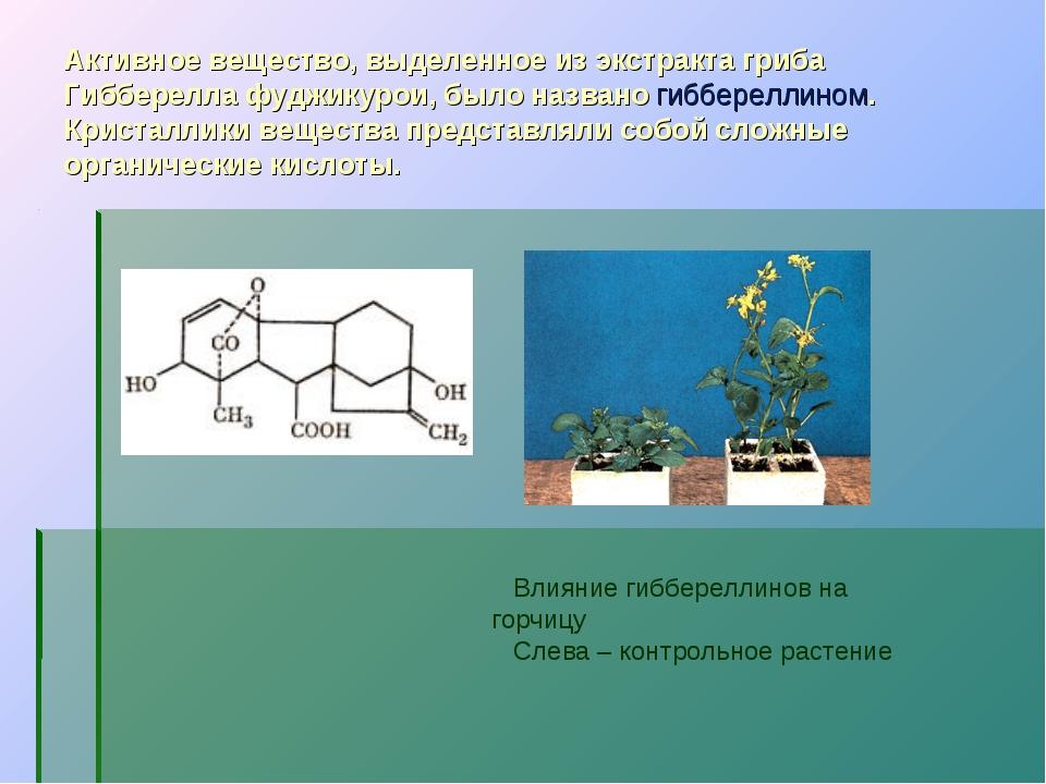 Активное вещество, выделенное из экстракта гриба Гибберелла фуджикурои, было...