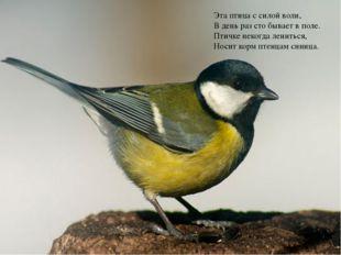 Эта птица с силой воли, В день раз сто бывает в поле. Птичке некогда лениться