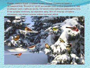 Птицы, удивительные создания, можно часами слушать их пение и любоваться ими.