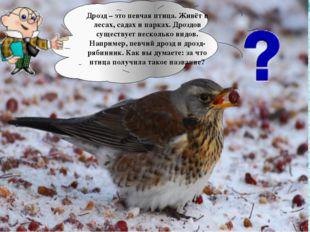 Дрозд – это певчая птица. Живёт в лесах, садах и парках. Дроздов существует н