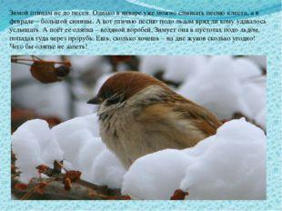 Зимой птицам не до песен. Однако в январе уже можно слышать песню клеста, а в
