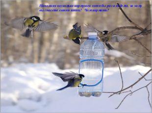 Наполняя несколько кормушек хотя бы раз в неделю, за зиму вы спасете сотни пт