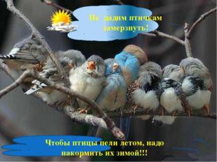 Не дадим птичкам замерзнуть! Чтобы птицы пели летом, надо накормить их зимой