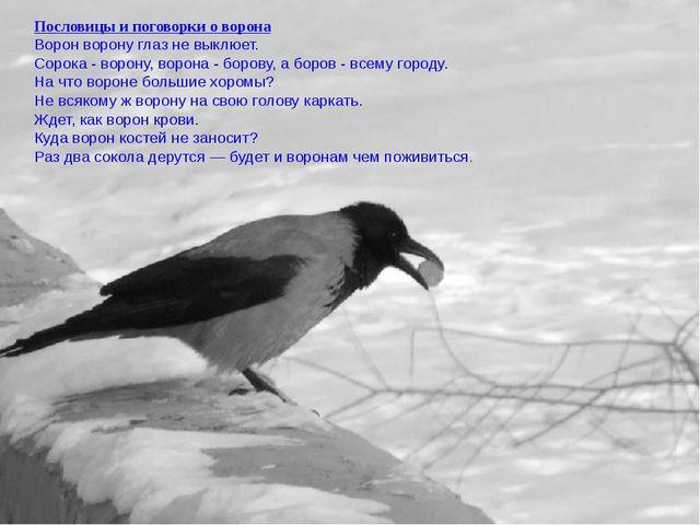 Пословицы и поговорки о ворона Ворон ворону глаз не выклюет. Сорока - ворону,...