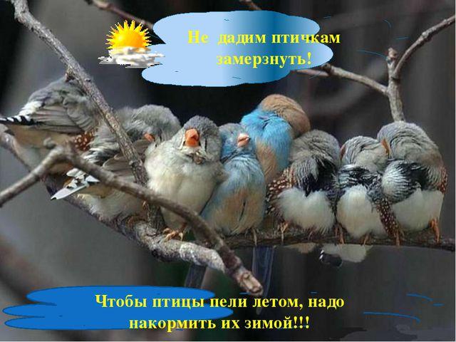 Не дадим птичкам замерзнуть! Чтобы птицы пели летом, надо накормить их зимой...