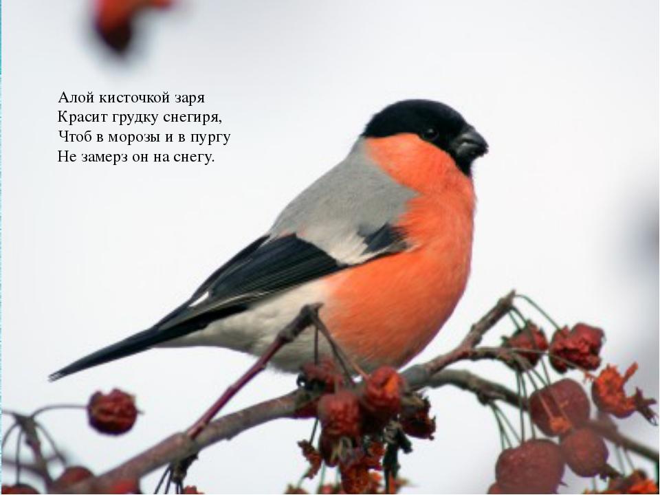 Алой кисточкой заря Красит грудку снегиря, Чтоб в морозы и в пургу Не замерз...
