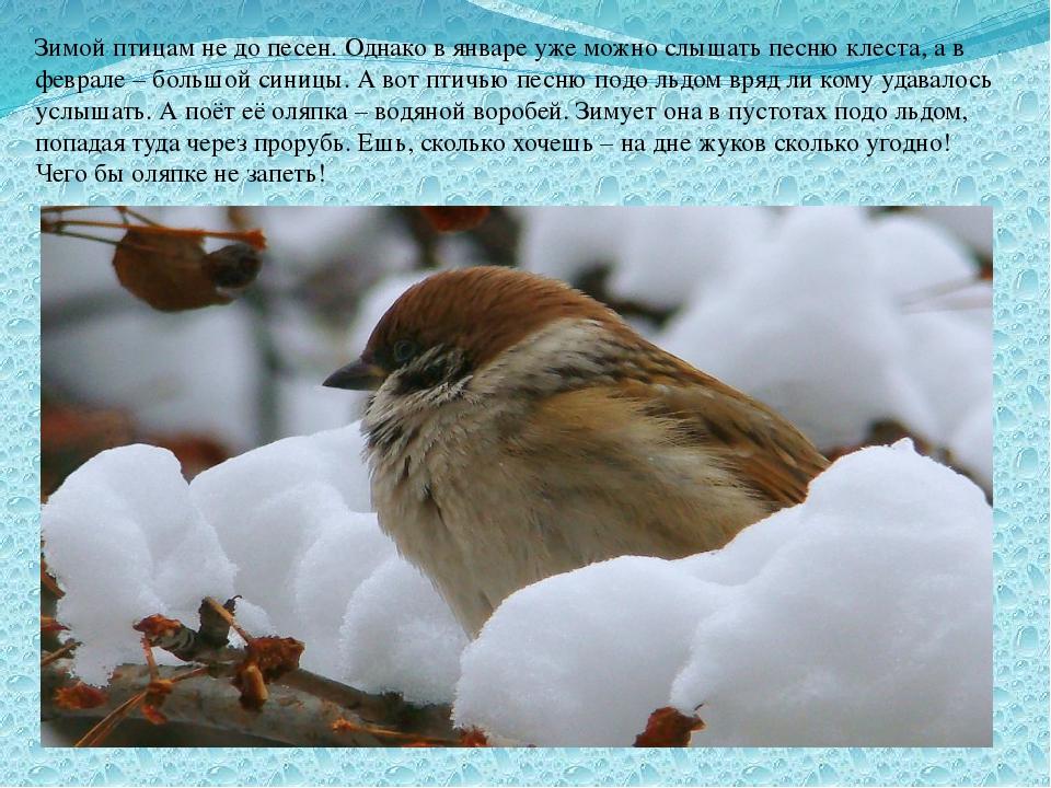 Зимой птицам не до песен. Однако в январе уже можно слышать песню клеста, а в...