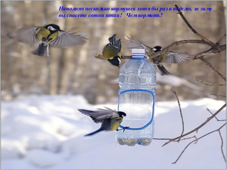 Наполняя несколько кормушек хотя бы раз в неделю, за зиму вы спасете сотни пт...