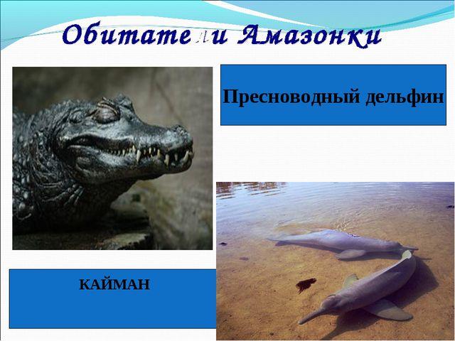КАЙМАН Пресноводный дельфин