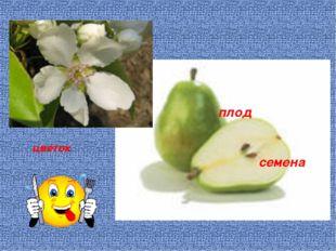 цветок плод семена