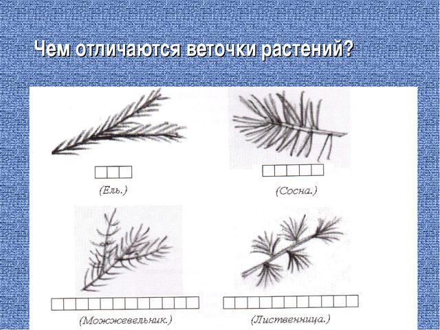 Чем отличаются веточки растений?