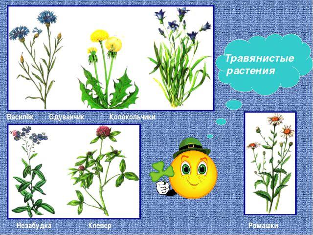 Василёк Одуванчик Колокольчики Незабудка Клевер Ромашки Травянистые растения