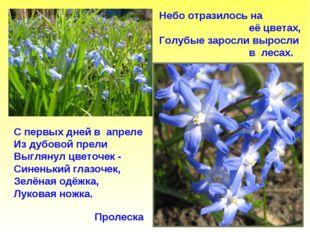 Пролеска Небо отразилось на её цветах, Голубые заросли выросли в лесах. С пер