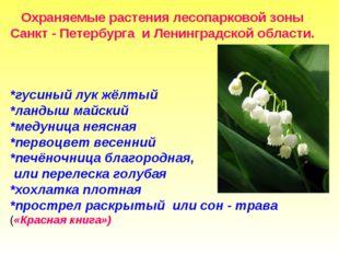 Охраняемые растения лесопарковой зоны Санкт - Петербурга и Ленинградской обл