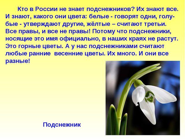 Кто в России не знает подснежников? Их знают все. И знают, какого они цвета:...