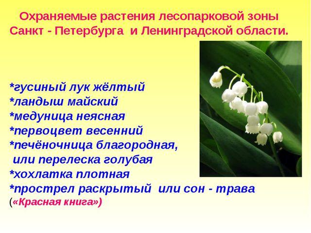 Охраняемые растения лесопарковой зоны Санкт - Петербурга и Ленинградской обл...