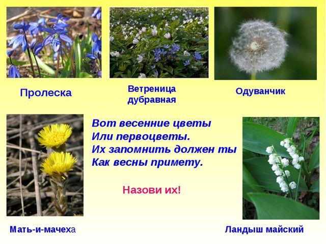 Вот весенние цветы Или первоцветы. Их запомнить должен ты Как весны примету....