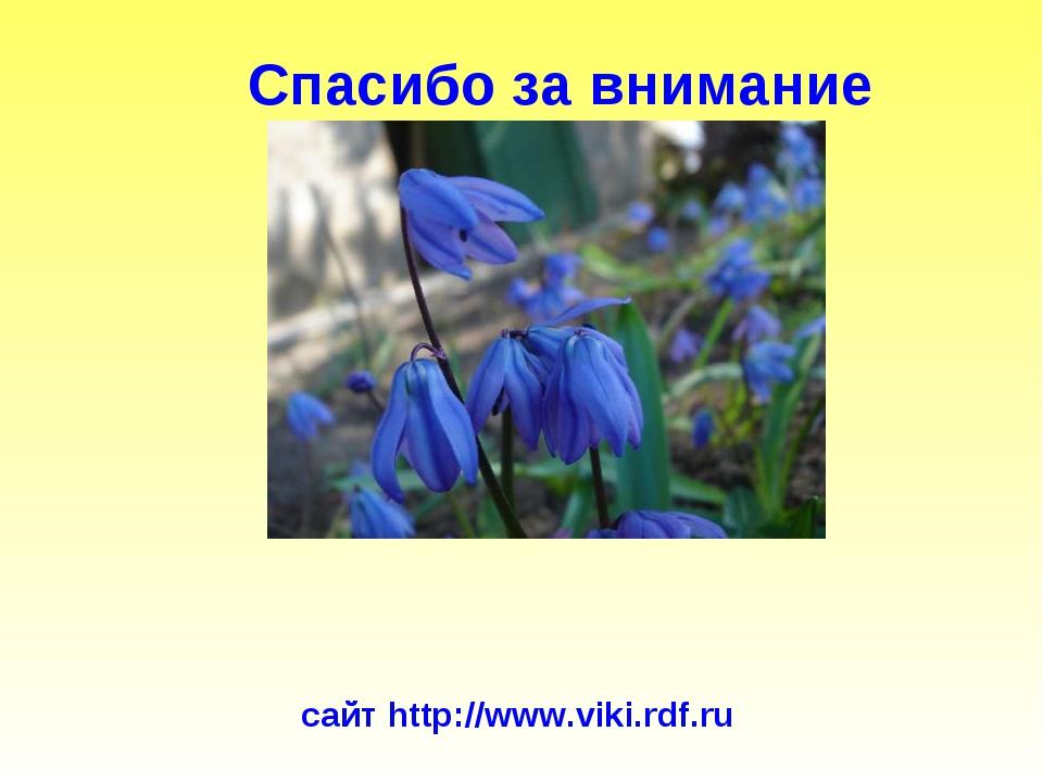 Спасибо за внимание сайт http://www.viki.rdf.ru К о н е ц. Автор: берюхова Е....