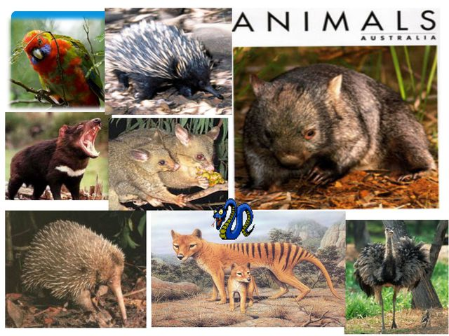An Animals of Australia imals of Australia ФAn Animals of Astralia